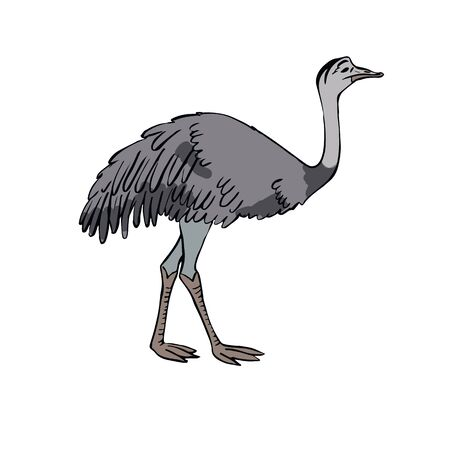 Ostrich Nanda Hand drawing sketch on white background. Illustration