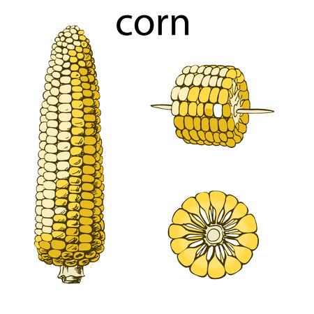 Monochrome illustration of corn on a light background. Vettoriali