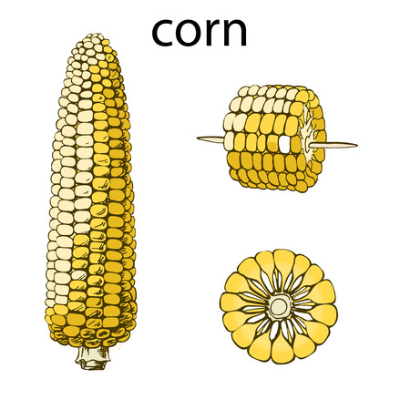 Monochrome illustration of corn on a light background. Illustration