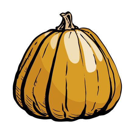 Colored sketch of pumpkin isolated on white background. Hand drawn vector illustration of a sketch style. Retro style. 矢量图像