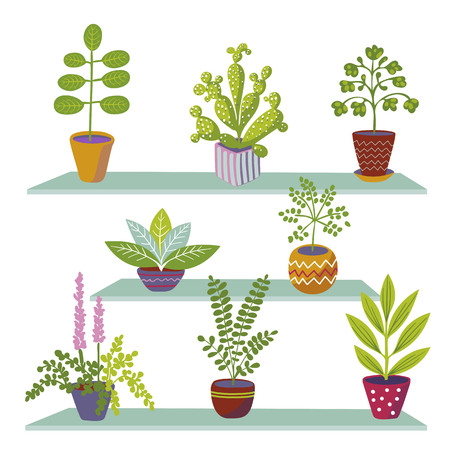 Set of colored home plants in the style of cartoon. Home plants in pots, standing on the shelves.