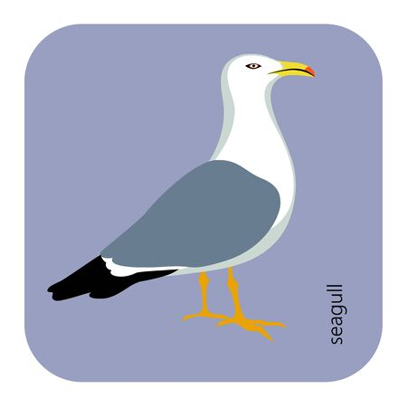 color, vector drawing of wild common bird species, Yellow-legged Gull, Larus michahellis, Western Yellow-legged Gull, large white-headed gulls, a subspecies of either the Caspian Gull, laridae, larus