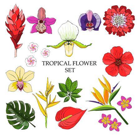 Tropische Kollektion mit exotischen Blumen und Blättern. Isolierte Elemente des Vektordesigns auf dem weißen Hintergrund.