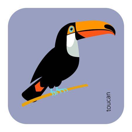brazilian toucan bird nature