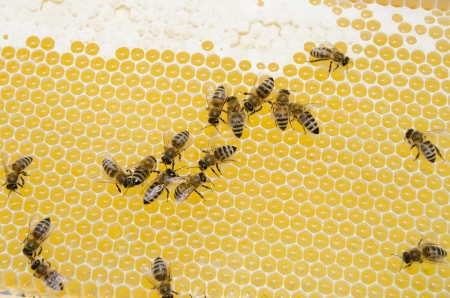 bee swarm: Bee swarm working  Stock Photo