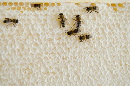 Honey cells sealed with wax photo