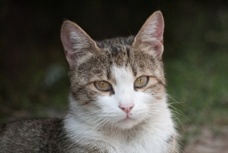 Cat with beauti eyes and portrait photo