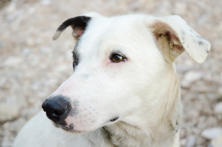 pupy: dog looking somethik