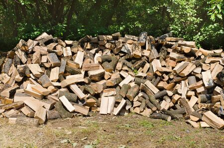 firewood on crowd in forest and prepair for winter photo