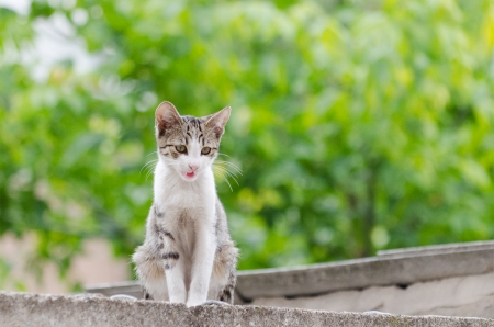 calico whiskers: tigerish-whit cat on garage in her nature environment Stock Photo