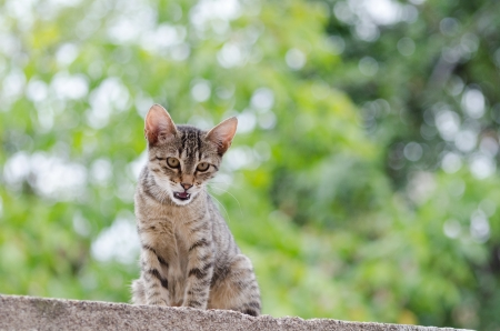 calico whiskers: tigerish cat in her nature environment Stock Photo