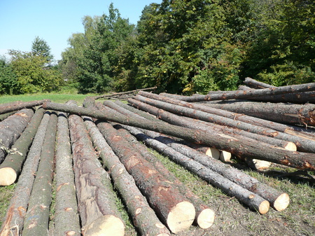 pile of logs: Pile of wooden logs