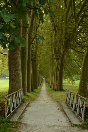 guarded: Straight bicycle lane guarded by trees