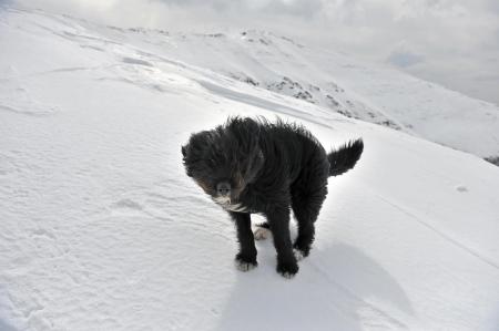 fagaras: Carpazi Pastore in piedi in cima Fagaras montagne cresta in inverno