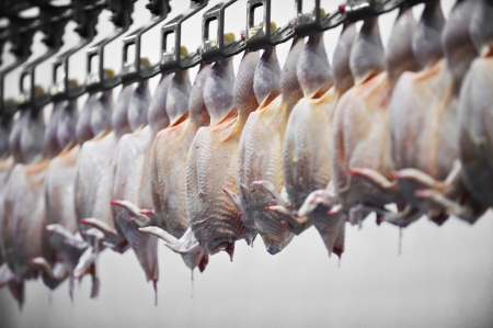 Food industry detail with poultry meat processing Stockfoto