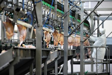 aves de corral: Detalle de la industria alimentaria con el procesamiento de la carne de aves de corral