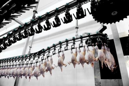 industria alimentaria: Detalle de la industria alimentaria con el procesamiento de la carne de aves de corral