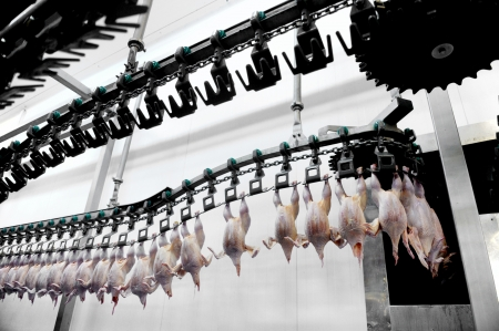 Food industry detail with poultry meat processing photo