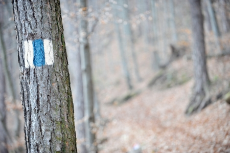 Blue stripe marking a tourist route on a tree photo