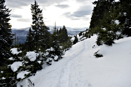 Tourist footprints in snow up on mountain in early winter photo