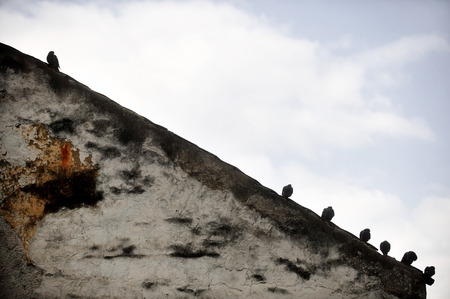 sloping: Silhouettes of several pigeons standing on the edge of a sloping roof