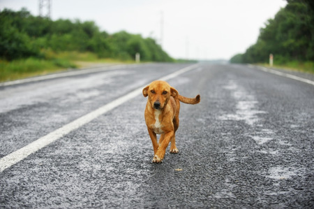A stray dog standing on an empty road Stockfoto