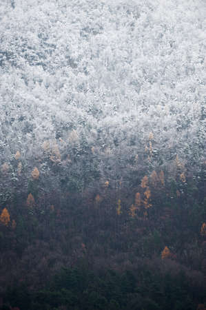 treetops: Late autumn scene with part of a forest covered in fresh snow