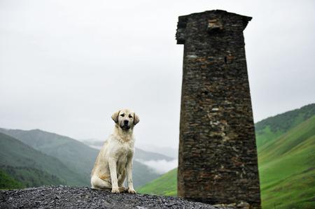 svan: Caucasian Shepherd with a svan tower in Ushguli village, upper Svaneti region in Georgia