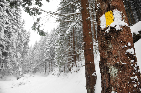 Yellow bar marking a hiking trail on a tree in winter time photo