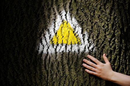 trail sign: Human hand on a tree bark marked with a yellow hiking trail sign