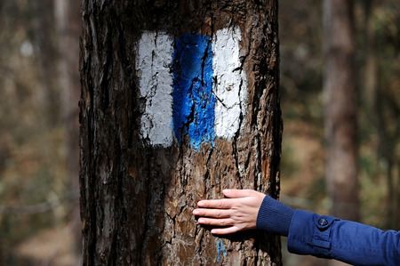 wooden trail sign: Human hand on a tree bark marked with a blue hiking trail sign