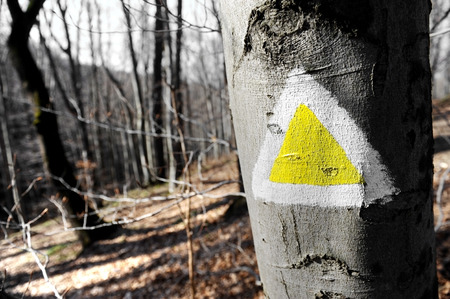 triangle shaped: Yellow triangle shaped hiking sign on a tree in the forest