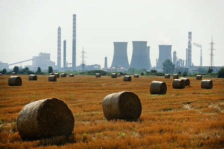 hay field: Several hay bales ready for harvest on a hay field with industrial scenery on background