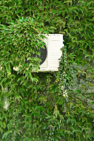 wall covering: Detail shot with green ivy on a house wall covering an air conditioner