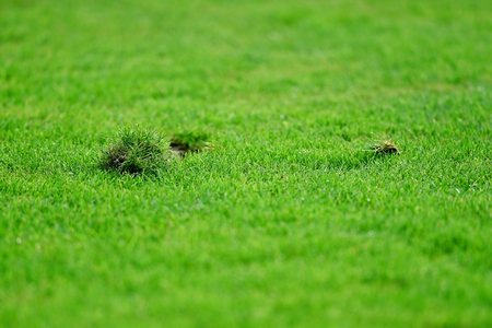sports field: Detail shot with pieces of damaged turf on a soccer field