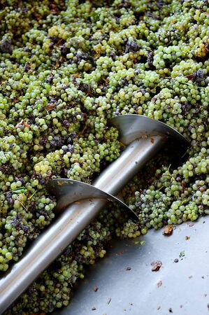stemming: Different types of grapes are crushed by industrial grape crusher machine