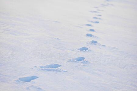 deep powder snow: Winter scene with fresh footprints in deep powder snow