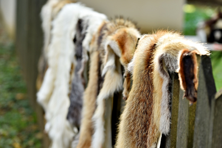 silver fox: Fox and goat fur for clothing exposed on a wooden fence Stock Photo