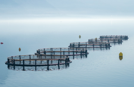 salmon fishery: Cages for fish farming Stock Photo