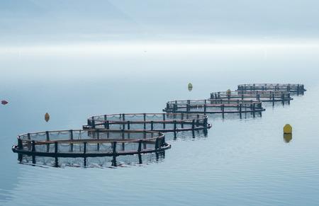 Cages pour l'élevage de poissons Banque d'images - 48447078