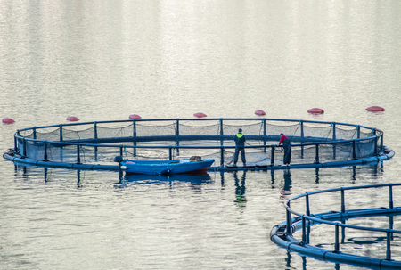 salmon fishery: Big Cages for fish farming in Montenegro