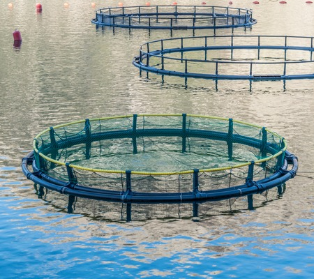 fish breeding: Big Cages for fish farming in Montenegro
