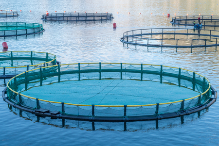 cages: Big Cages for fish farming in Montenegro