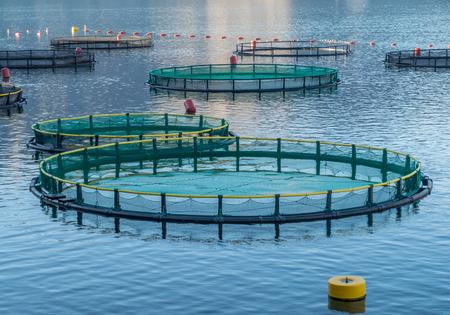 Big Cages pour l'élevage de poissons au Monténégro Banque d'images - 54310458