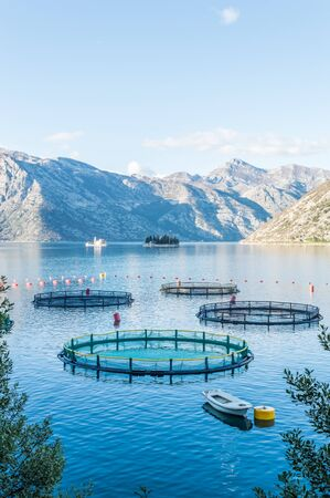 commercial fisheries: Big Cages for fish farming in Montenegro