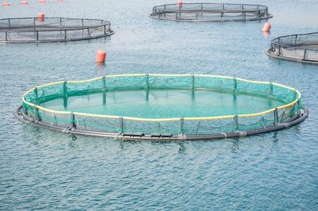 Grandes jaulas para la cría de peces en Montenegro Foto de archivo - 55976254