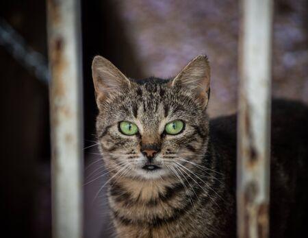Chat tigré aux yeux verts derrière des caillebotis