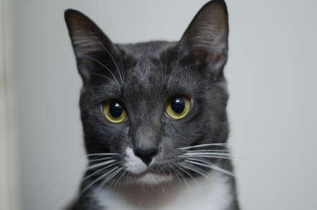 close up: cat close up