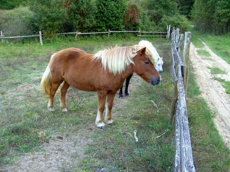 Horse in the pasture of