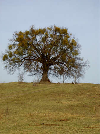 The tree on the mountain